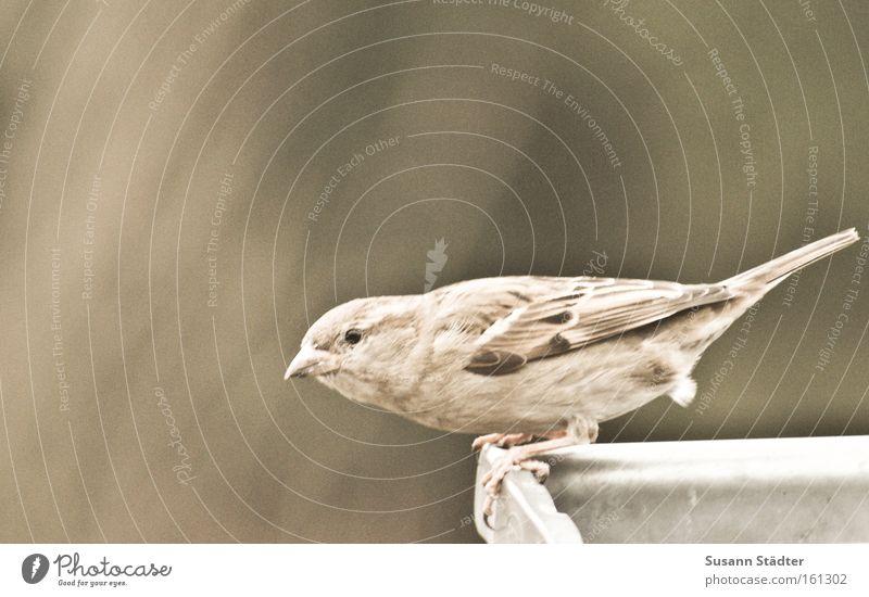 bereit zum Abflug... Wasser Einsamkeit Tier Freiheit braun Vogel fliegen Luftverkehr Feder Dach sanft Märchen Schnabel singen Schwanz füttern