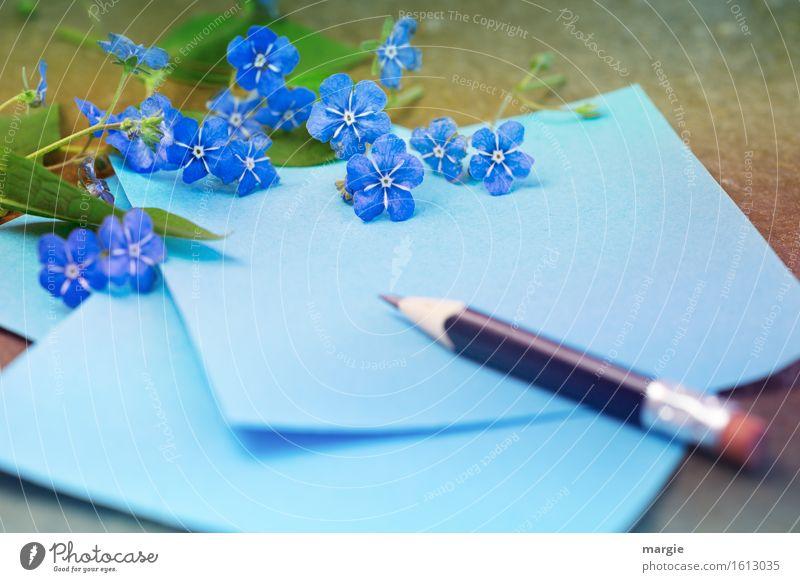 Vergissmeinnicht - Blumen mit blauen Papier und Bleistift Beruf Büroarbeit Arbeitsplatz Werbebranche sprechen Blüte Grünpflanze schreiben Freundschaft Liebe