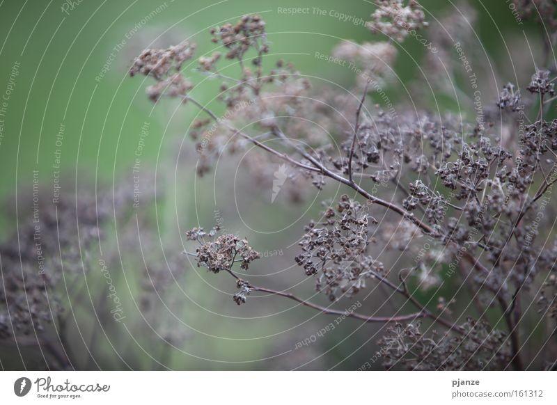 Tristesse grau braun Gras Pflanze Urwald Herbst trocken Trauer Stengel Zweig Makroaufnahme trist brennen getrocknet Traurigkeit Nahaufnahme