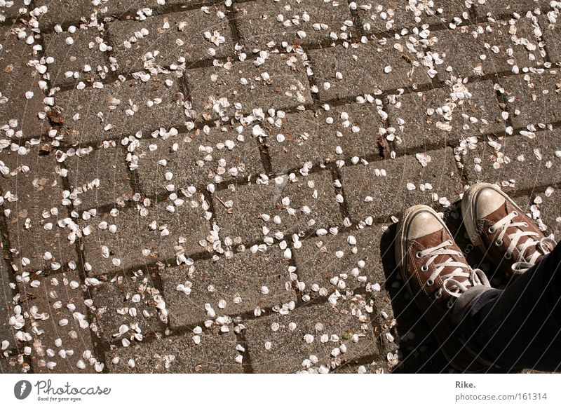 Die Liebe zum Schuh. Farbfoto Außenaufnahme Muster Textfreiraum links Textfreiraum oben Textfreiraum unten Textfreiraum Mitte Tag Vogelperspektive Lifestyle