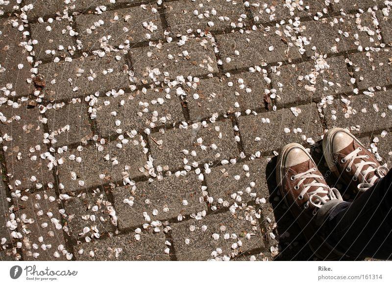 Die Liebe zum Schuh. Mensch Frau Natur Jugendliche Blume Freude Blatt Erwachsene Straße grau Blüte Stein Frühling Stil Beine träumen