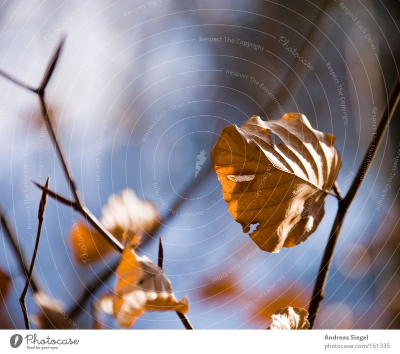 Frühling??? Natur Blatt Herbst Sträucher trocken Zweig vertrocknet