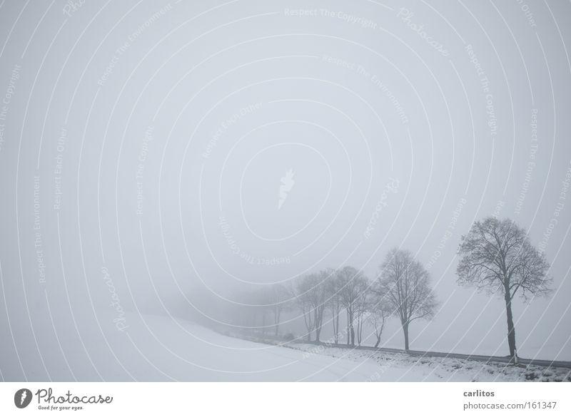 Eins hab ich noch ........ weiß Baum Winter ruhig Schnee Traurigkeit Denken Nebel Trauer Frost Verzweiflung bewegungslos diffus schweigen