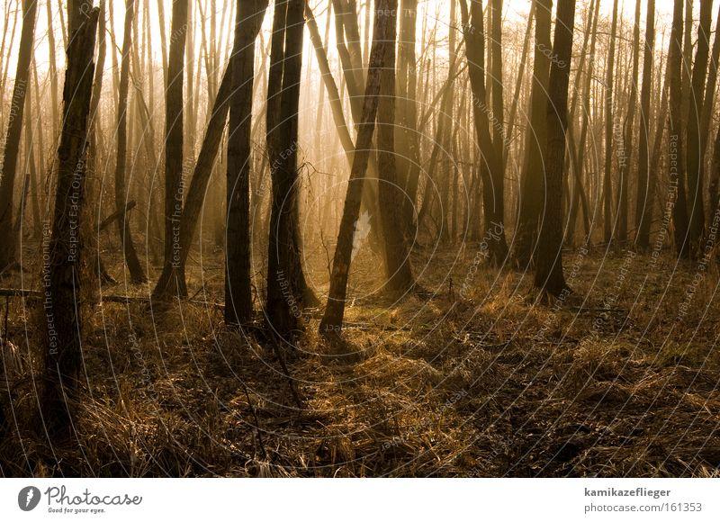 feenwald Baum Winter Wald gold Nebel Erlen
