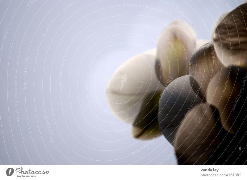 Von hinten Blume Pflanze ruhig Blüte hell Beleuchtung Hintergrundbild Dekoration & Verzierung Blühend sanft edel Orchidee hinten rückwärts schimmern