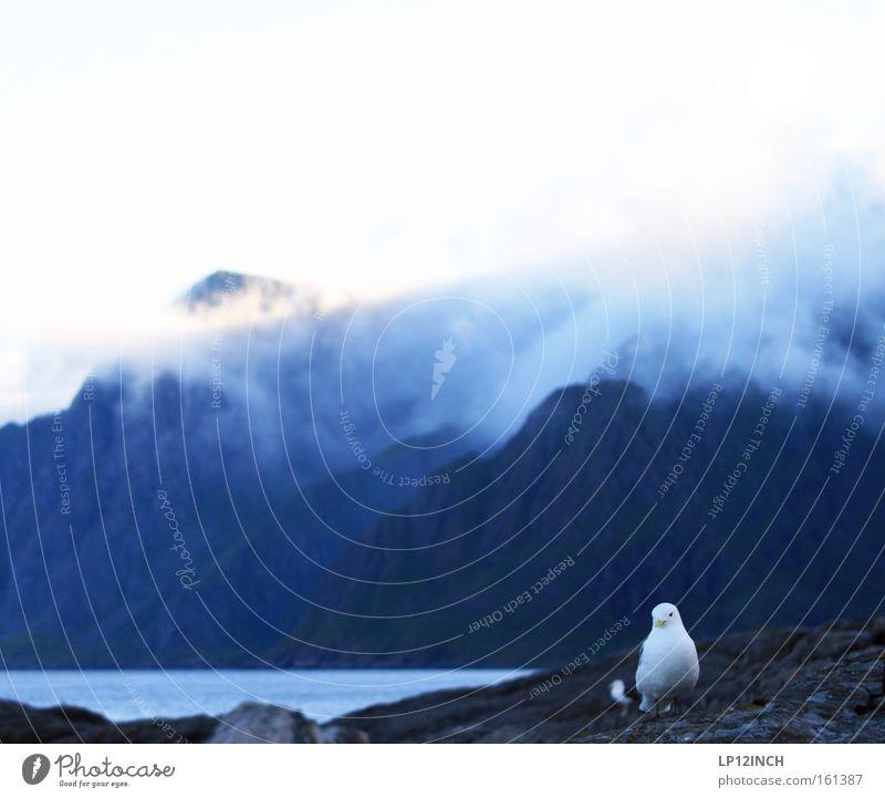 Doppelvogel.... und andere Beleidigungen Natur Wasser Sommer Ferien & Urlaub & Reisen Wolken Einsamkeit Berge u. Gebirge Stein Vogel Tierpaar Nebel wandern Felsen Möwe Norwegen