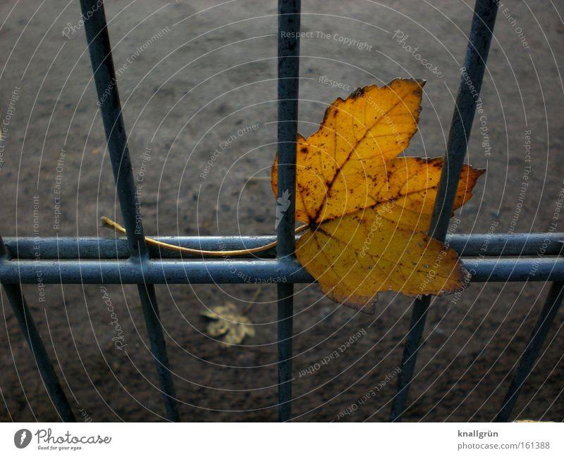 Hängengeblieben Blatt Herbst Traurigkeit Metall Vergänglichkeit Jahreszeiten Zaun Gitter gold-braun