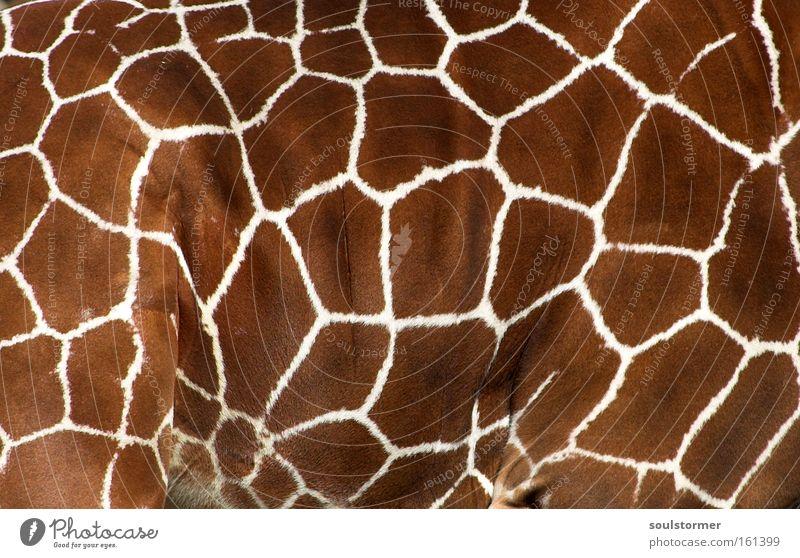 Sofa? Giraffe Holzgiraffe Muster Hals Zoo Fell Decke Tier Leben Dekoration & Verzierung Afrika Schlafzimmer Wohnzimmer Säugetier Giraffenmuster