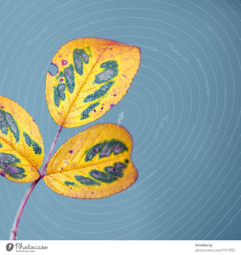 blattplatt Natur blau Baum Pflanze Farbe Blatt Umwelt gelb Herbst Kunst Park außergewöhnlich Design frisch ästhetisch Vergänglichkeit