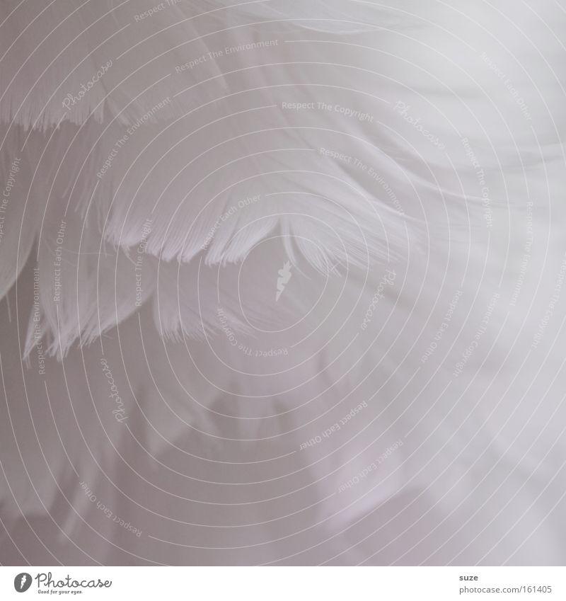 Kuschelweich weiß Dekoration & Verzierung Feder weich zart himmlisch Material sanft leicht Weihnachtsdekoration unschuldig Flaum Daunen abstrakt