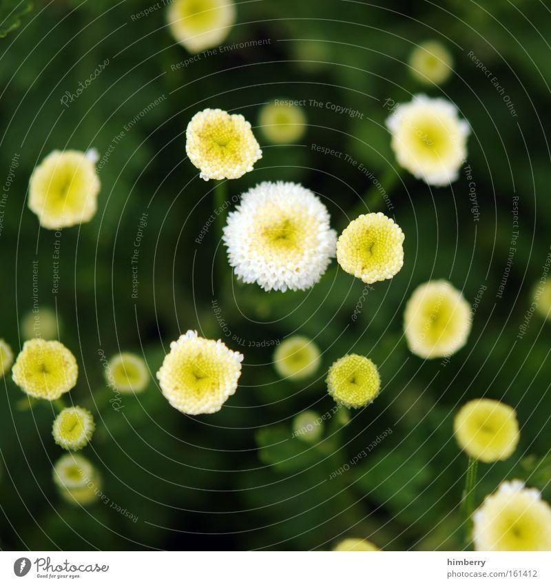 points of no return Natur schön Blume grün Pflanze Sommer gelb Farbe Wiese Stil Frühling Park Zufriedenheit Hintergrundbild Design ästhetisch