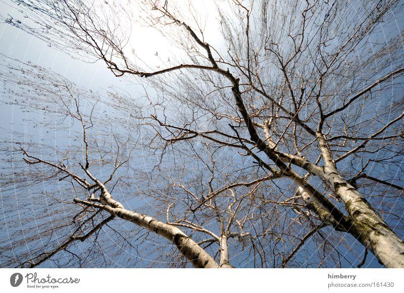 stammbaum der familie birke Farbfoto mehrfarbig Außenaufnahme Detailaufnahme Strukturen & Formen Textfreiraum links Textfreiraum oben Textfreiraum Mitte Licht