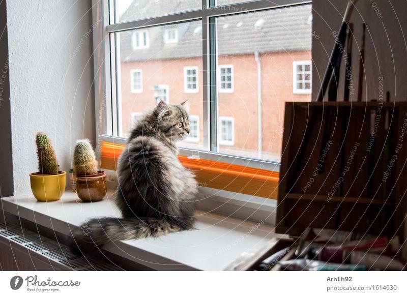 Fensterplatz malen Tier Haustier Katze Tiergesicht Fell 1 Tierjunges Pinsel beobachten Erholung sitzen Freundlichkeit klein natürlich schön Stimmung Tierliebe