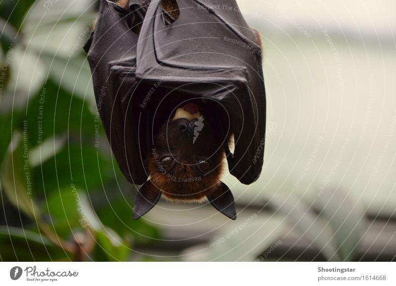 abhängen Tier schwarz Umwelt Angst Wildtier Flügel Abenteuer Tiergesicht Fressen
