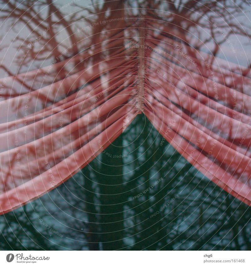 Innen und außen Vorhang Glasscheibe Reflexion & Spiegelung Baum Detailaufnahme Bogen retro Wohnzimmer Kommunizieren rosam gerafft Außenaufnahme