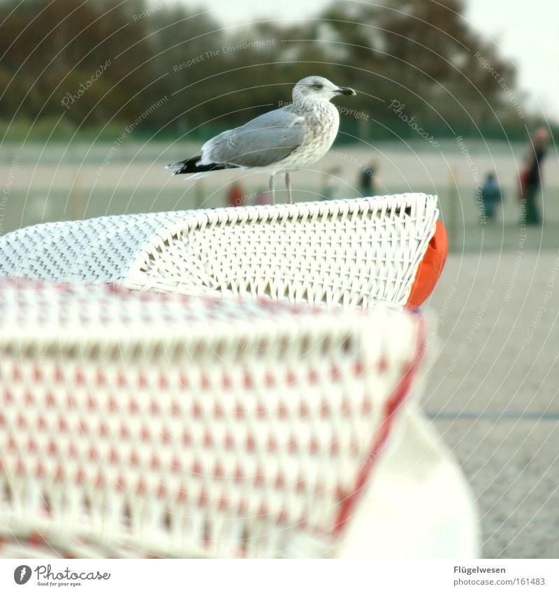 Möwenpick(nick) am Strand Meer Einsamkeit Vogel Küste warten Aussicht Schilfrohr genießen Ostsee Nordsee Korb füttern Futter binden