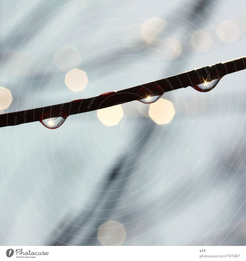 Nachem Räge chonnt d'Sonne.... Natur Wasser schön Frühling Regen Kraft Wetter nass Hoffnung Ast Zweig