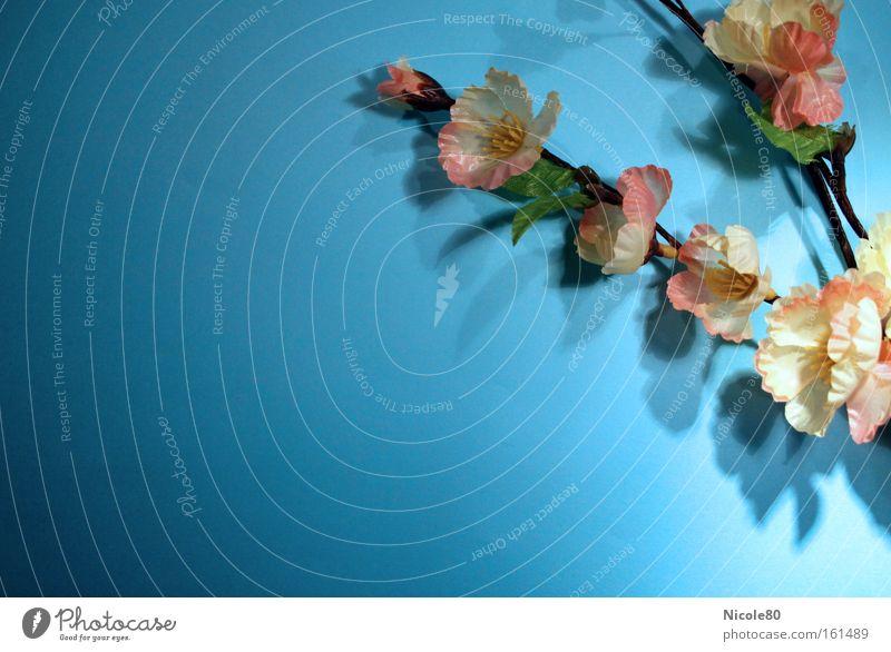 Frühling der sich ewig hält Blume Blüte frisch Kitsch Dekoration & Verzierung zart Kunststoff Zweig künstlich Kirschblüten sommerlich hell-blau Kunstblume