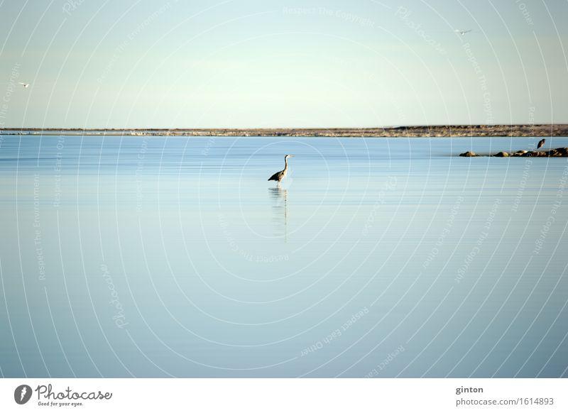 Fischreiher am Saltonsee Natur Wasser Landschaft ruhig Tier Küste fliegen See Vogel stehen Seeufer Möwe Jagd Kalifornien Reiher Graureiher