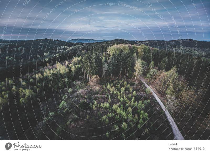 Frühling Natur Landschaft Pflanze Himmel Wolken Horizont Schönes Wetter Baum Wald Hügel Gipfel Unendlichkeit Idylle Ferne Fußweg Waldlichtung Baumstamm