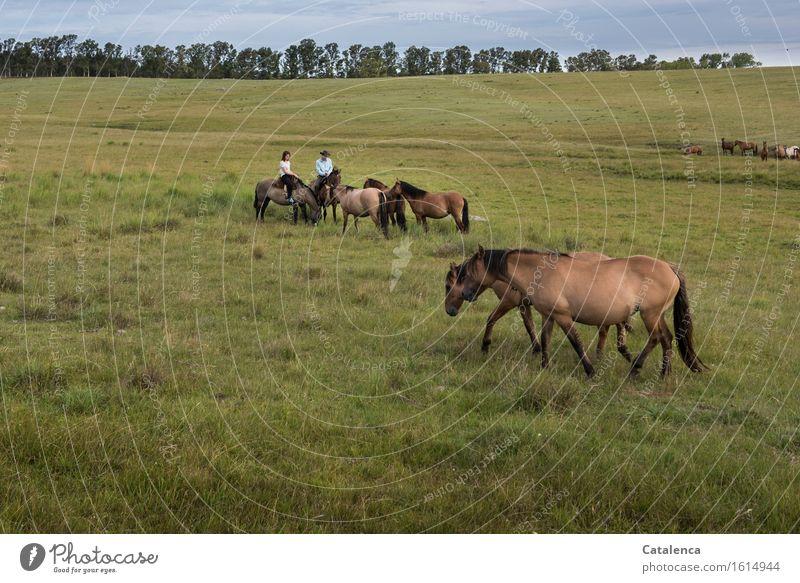 Begrüßung Reiten Mensch Junge Frau Jugendliche Junger Mann 2 Landschaft Pflanze Tier Horizont Eukalyptusbäume Wiese Feld Pferd Tiergruppe beobachten Bewegung