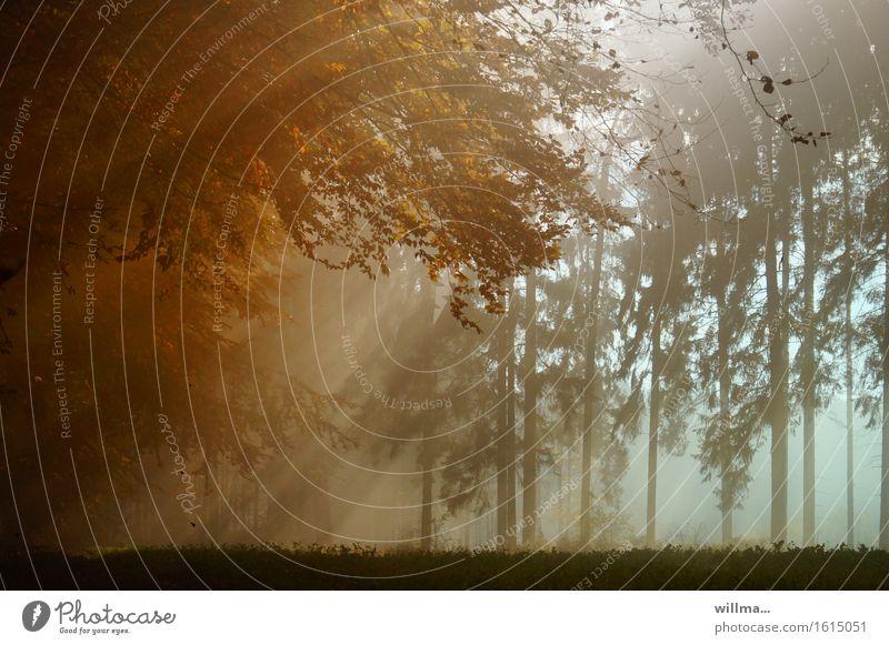 ///|| Herbst Wald Natur Sonnenstrahlen Sonnenlicht herbstlich Nebel Herbstfärbung Mischwald Farbfoto Außenaufnahme