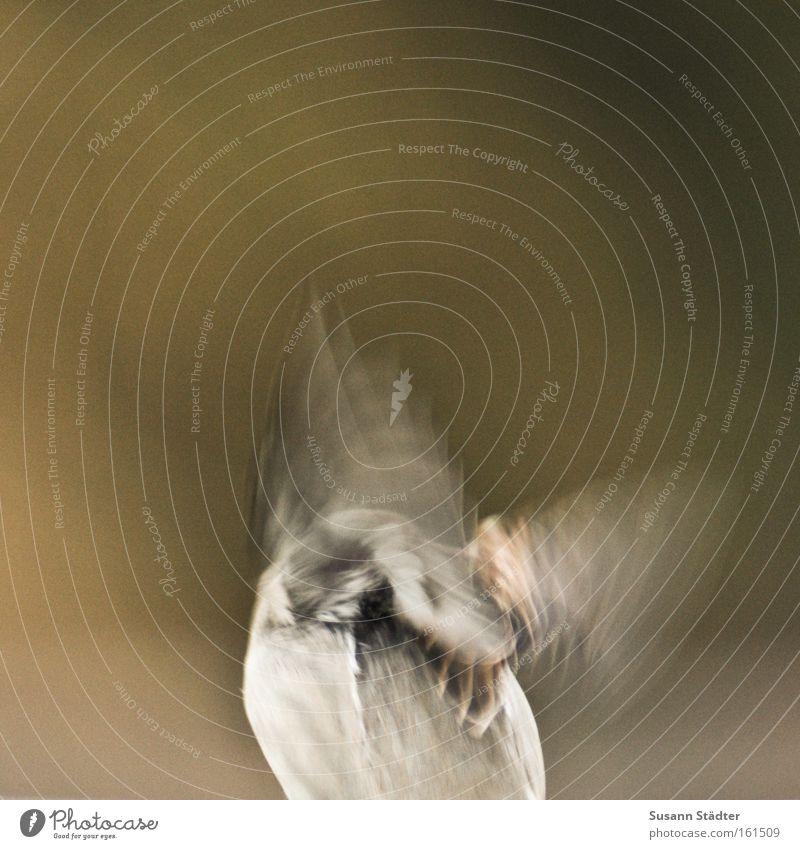 Auf die Plätze... Vogel fliegen Luftverkehr Dach Dachrinne Wasser Feder Schwanz Spatz braun Tier sanft Freiheit Einsamkeit singen Gezwitscher Lied Kinderlied