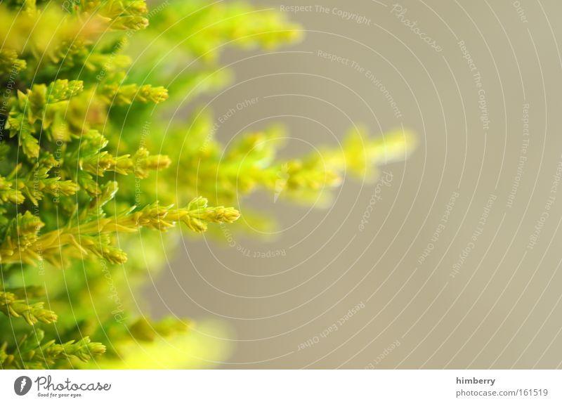 triebwerk Natur grün Baum Pflanze Sommer Leben Frühling Park natürlich frisch ästhetisch Sträucher Landwirtschaft Jahreszeiten Tanne Zweig