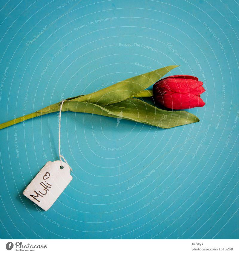 Muttitag blau schön grün Farbe weiß Blume rot Liebe Gefühle feminin Feste & Feiern Freundschaft Schilder & Markierungen ästhetisch Schriftzeichen retro