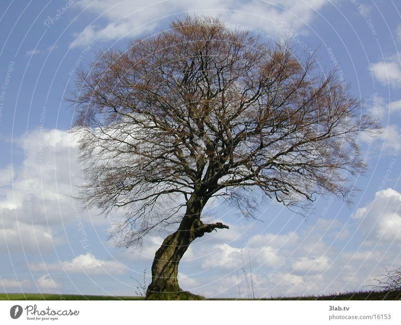 lebensbaum Himmel Baum blau Landschaft