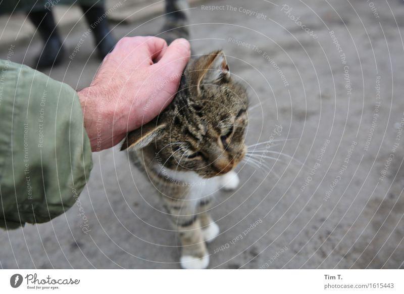 Katze streicheln Mensch Hand Tier Liebe maskulin Partnerschaft Haustier Nutztier Streicheln