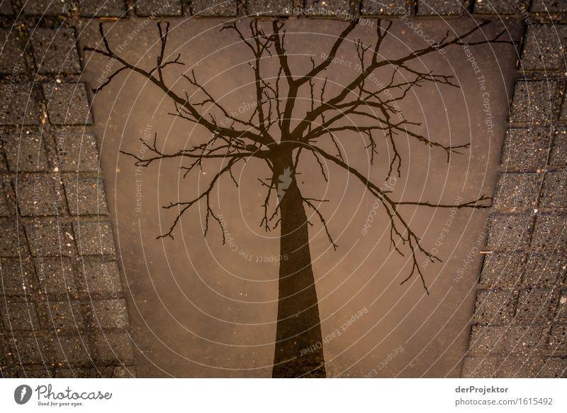 Gerahmter Baum in Pfütze Natur Ferien & Urlaub & Reisen Umwelt Traurigkeit Frühling Berlin Tod Kunst Regen Tourismus Ausflug Neugier Trauer Wahrzeichen Denkmal