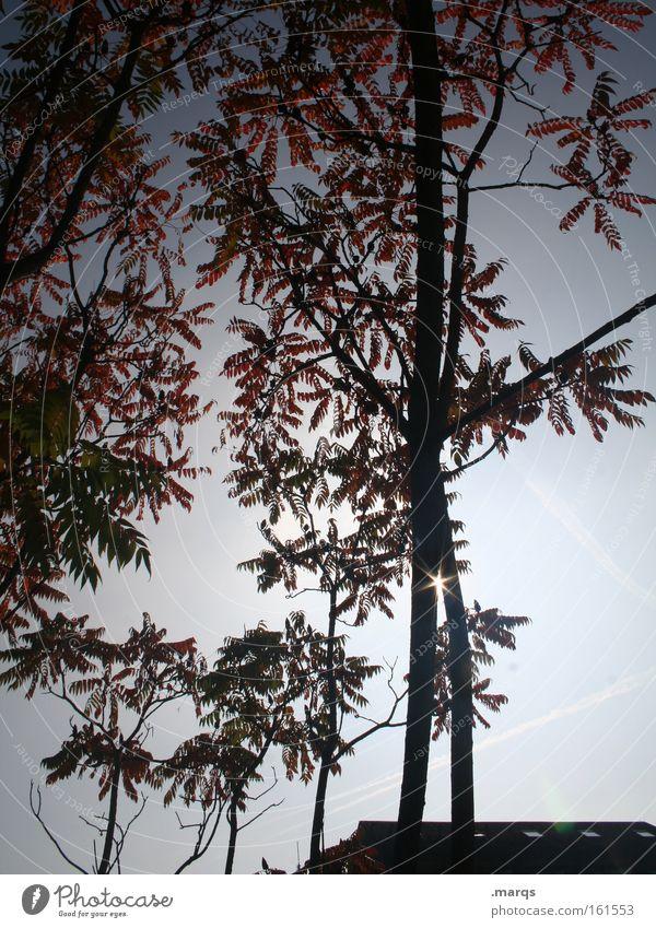 Lichtblick Farbfoto Außenaufnahme Morgen Silhouette Sonnenstrahlen Gegenlicht Natur Pflanze Frühling Baum Blatt Blühend blau rot Ast