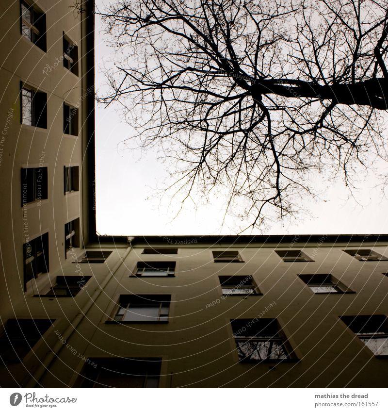 ANDERER HINTERHOF Haus Gebäude Altbau Wohnung Froschperspektive Himmel blau Fenster Linie Baumkrone Ast Holz Fensterscheibe hoch Trauer Verzweiflung Herbst