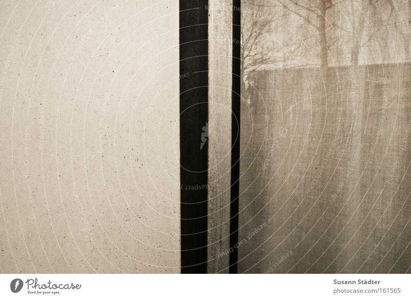 Zwischen Rauhfaser und Wand alt weiß Baum Winter Fenster Garten grau Metall Glas Platz trist Aussicht Metallwaren Spiegel