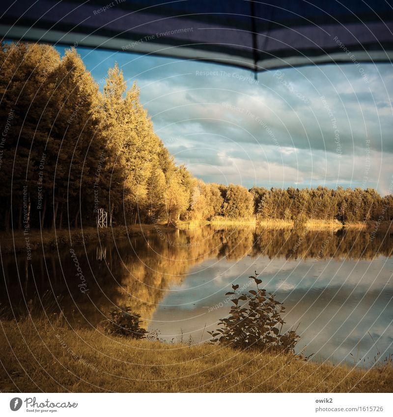 Mal Sonne, mal Regen Umwelt Natur Landschaft Himmel Wolken Horizont Herbst Klima Schönes Wetter Pflanze Baum Gras Sträucher Wald Seeufer Regenschirm aufgespannt