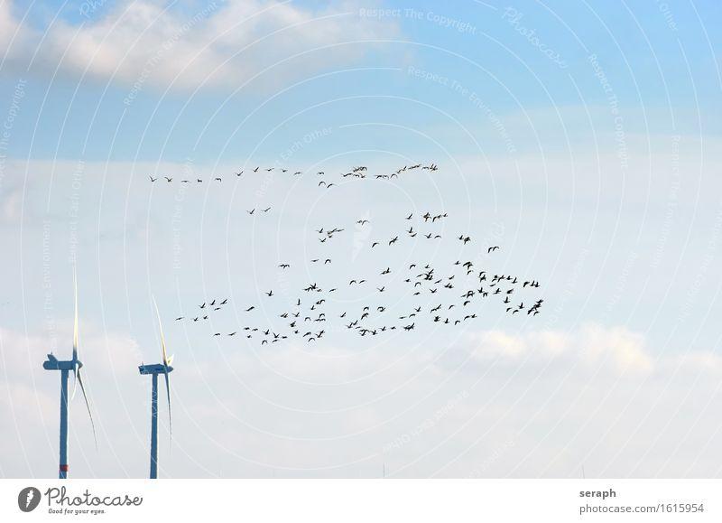 Zugvögel Vogel Zugvogel Natur fliegen Menschengruppe Graugans Gans Windkraftanlage Umweltschutz ökologisch Naturschutzgebiet Nordsee Himmel Wolken Tiergruppe