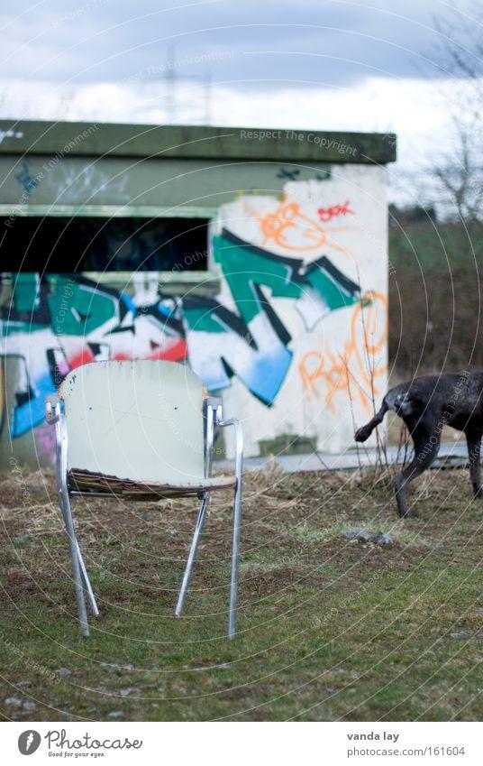Vierbeiner Hund Urin Graffiti Schriftzeichen Stuhl Möbel Innenarchitektur Stadt Natur Bunker verfallen Haus Haustier Wandmalereien Wohnzimmer sperrmüll