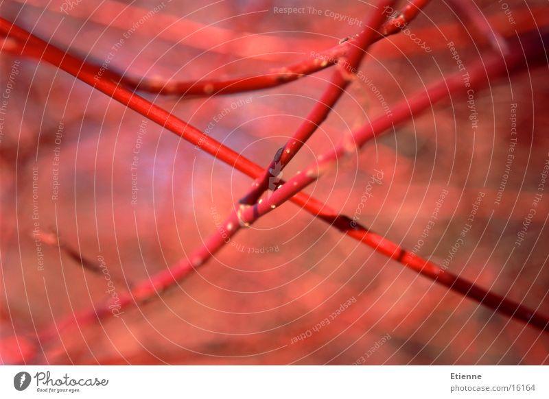 Herbststimmung 2 rot Zweig Ast Makroaufnahme Natur