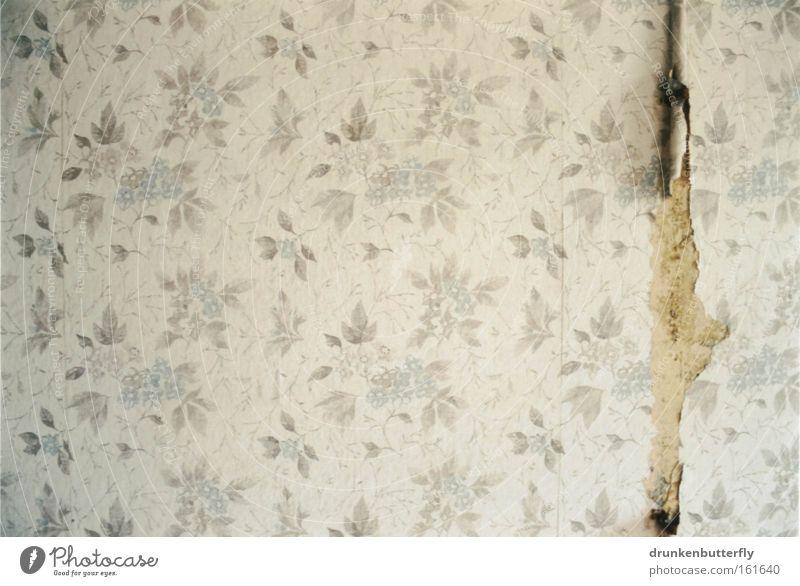 Wandgestaltung weiß Blume blau Farbe grau Hintergrundbild retro Tapete verfallen Verfall DDR bleich Riss