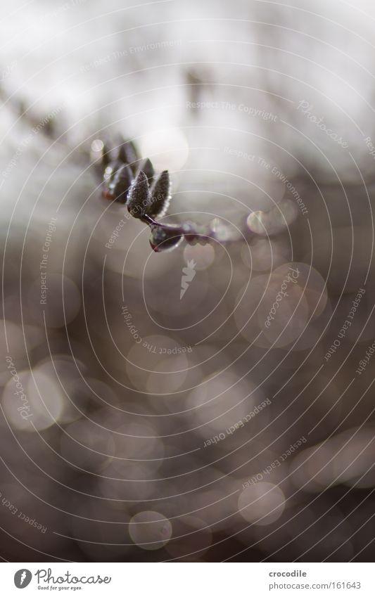 Frühlingserwachen schön Blatt Leben Kraft Ast aufwachen herausragen