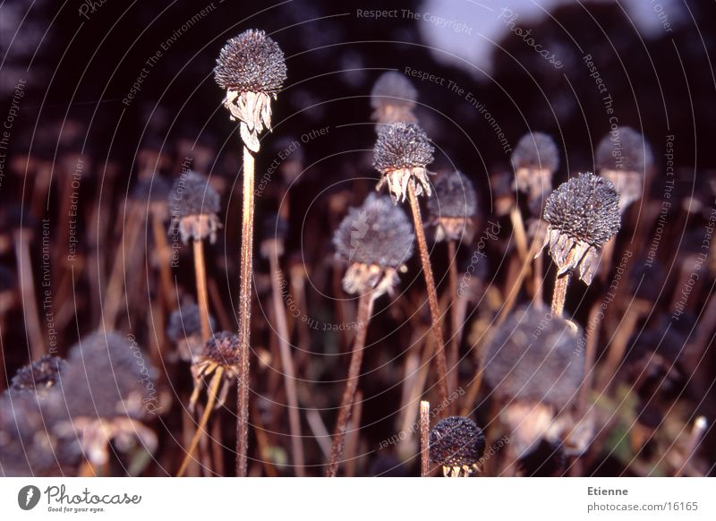 Herbststimmung 3 Natur Feld Mohn verblüht