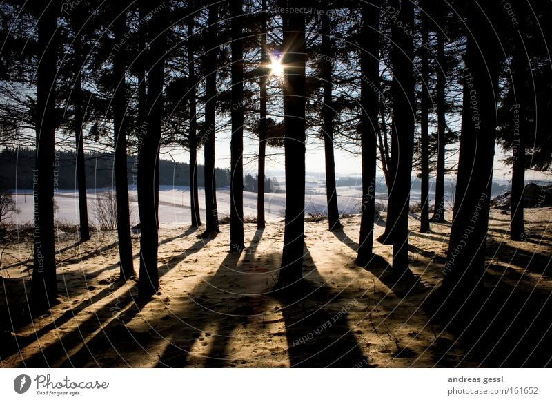 Baum Sonne Winter Schnee Holz Landschaft