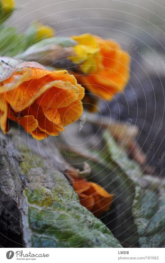 Vergängliche Jugend - II Blume Herbst Tod Blüte Frühling orange Trauer Vergänglichkeit Verzweiflung Abschied weinen Erinnerung Friedhof Souvenir getrocknet Beerdigung