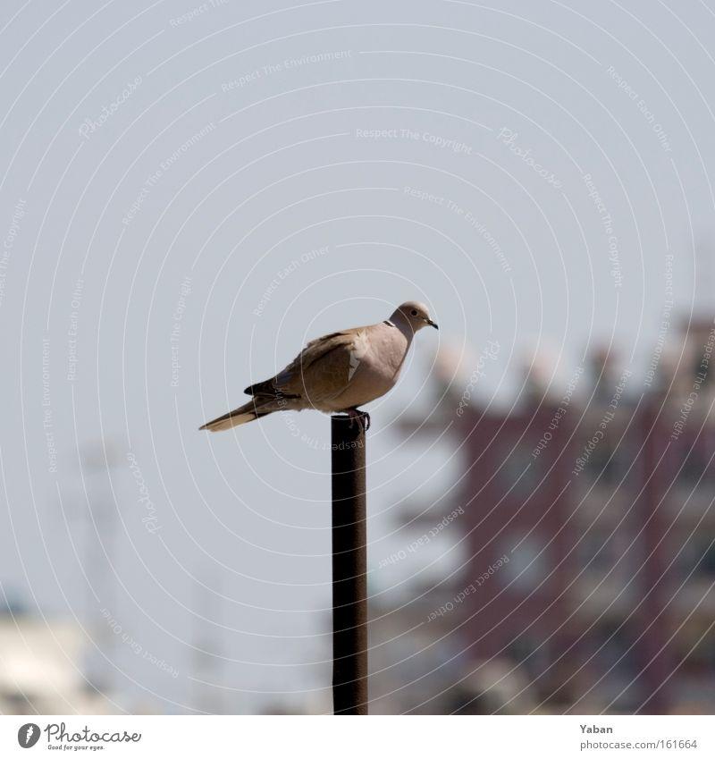 Pole Position Vogel Taube Fahnenmast Pfosten Mitte Türkei Mittelmeer Luftverkehr Mittelpunkt Einsamkeit überblicken Allesblicker Vogelperspektive
