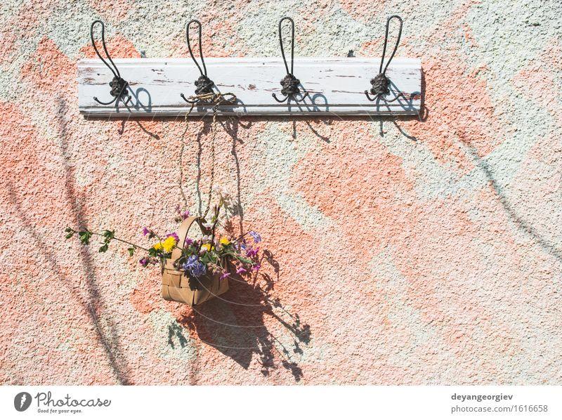 Blumen im Korb auf Aufhänger auf einer Wand Topf Design schön Sommer Garten Dekoration & Verzierung Natur Pflanze Blatt Blüte grün weiß Farbe erhängen Frühling