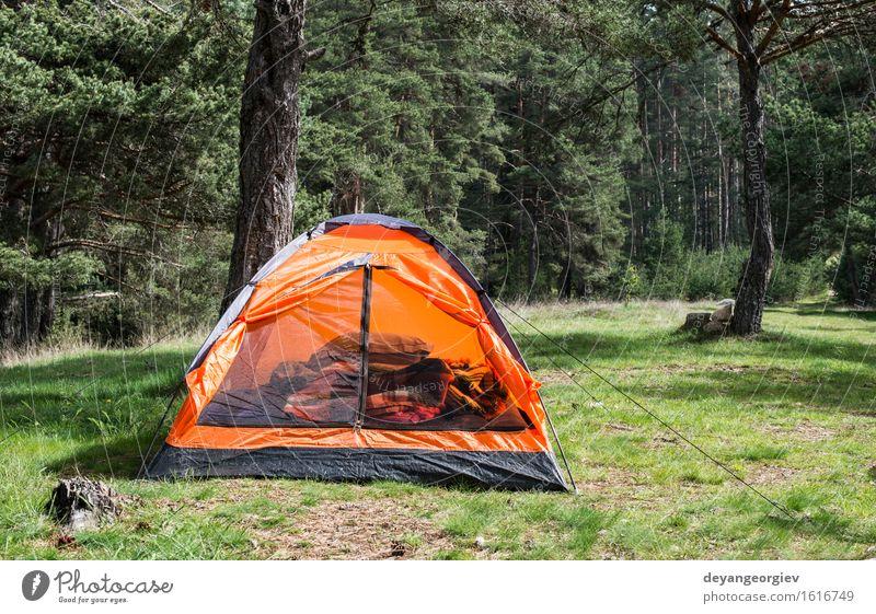 Orange Zelt in einem Kiefernwald Natur Ferien & Urlaub & Reisen grün Sommer Baum Erholung Landschaft Wald Berge u. Gebirge natürlich Gras Tourismus Park