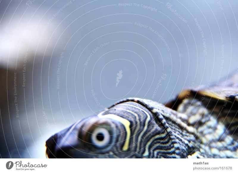 Schildkröte I Muster Makroaufnahme Leder Haut gepanzert turtle streigen Auge