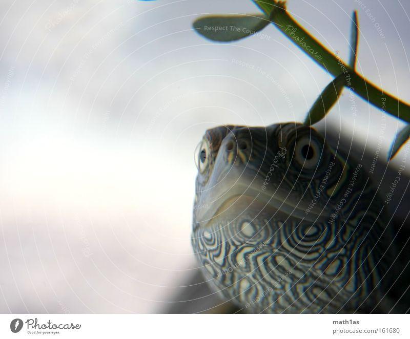 Schildkröte II Wasser Pflanze Auge Haut Leder gepanzert Reptil Unterwasseraufnahme