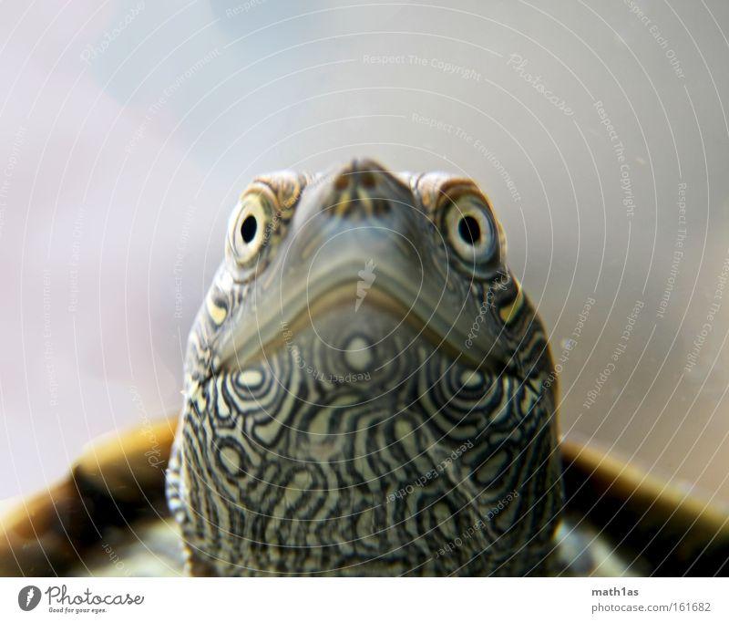 Schildkröte III Wasser Pflanze Auge Haut Unterwasseraufnahme Reptil Muster Leder Tier gepanzert
